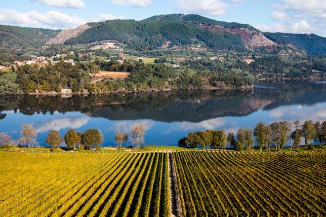 Previsións da Comisión Europea para o sector do viño ata ano 2030