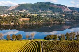 Comeza en Ourense a Semana Vitivinícola de Galicia cun amplo programa de actividades