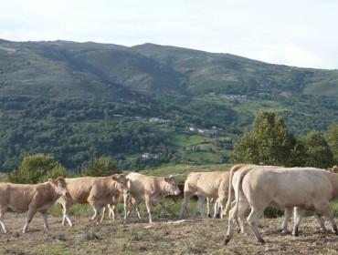 Expertos destacan o gran potencial da montaña galega para gandeiría de calidade