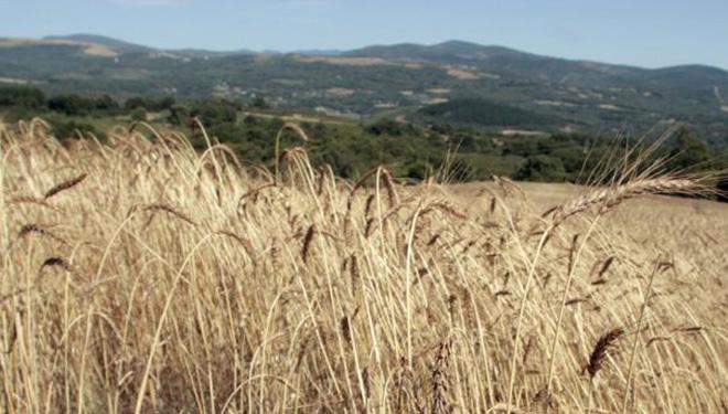 """Los panaderos gallegos piden """"sembrar Galicia de cereal autóctono"""""""