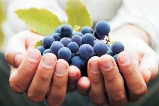 A EVEGA organiza mañá en Monterrei unha xornada sobre viticultura ecolóxica