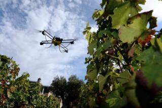Investigadores galegos desenvolven un método de manexo e control integral de viñedos con eficiencia enerxética