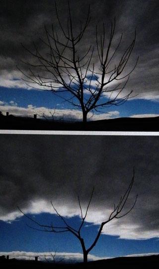 Aspecto dunha árbore antes e despois dunha poda en vaso.