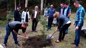 Plantación de un acebo tras la presentación.