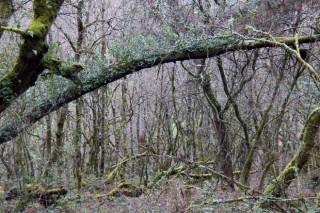 Propostas para incentivar as agrupacións de propietarios forestais