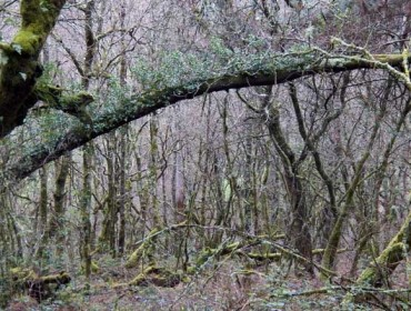 Medio Rural niega que se vayan a 'usurpar' montes vecinales abandonados
