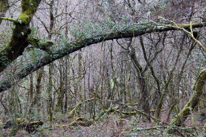 A xestión forestal, o cortalumes oculto