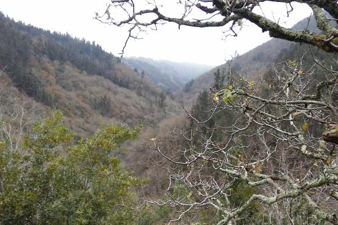 Cinco problemas do monte galego que destapa a traxedia de Portugal