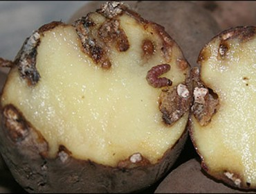 Couza da pataca: Lugares e datas das charlas informativas na Costa da Morte