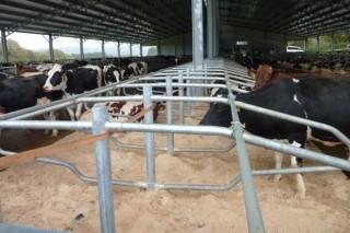 Convócanse as axudas do Igape para diminuír os custos financeiros das explotacións lácteas