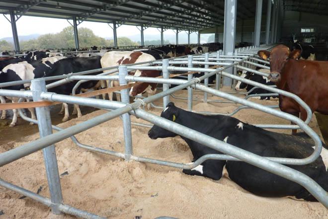 Publicadas as axudas concedidas por plans de mellora a 692 gandeiros e agricultores