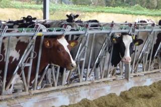 Ulega propón asumir excedentes lácteos para o seu envío como axuda humanitaria