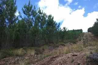Ayudas para prevención de incendios en comunidades de montes y Sofor