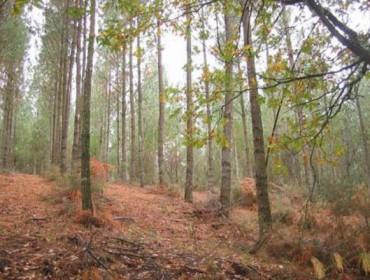 La Deputación de Pontevedra abre el plazo de las ayudas para parques forestales