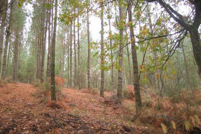 Medio Rural aumenta partidas para el sector forestal en los presupuestos 2016