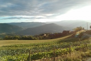 Proxecto pioneiro para crear un banco de terras abandonadas en 5 concellos galegos e 3 asturianos