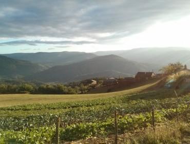 Nos últimos 5 anos en Galicia pasaron ao abandono unhas 150.000 hectáreas