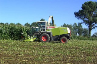 A PAC que se aplicará en Galicia mantén as limitacións para o cultivo de millo forraxeiro