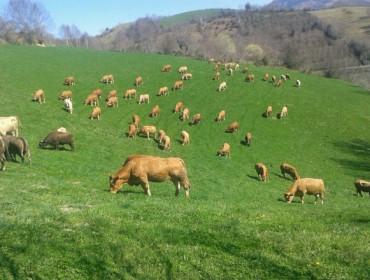 O sector gandeiro empraza á Xunta a garantir as axudas agroambientais tralo 2020