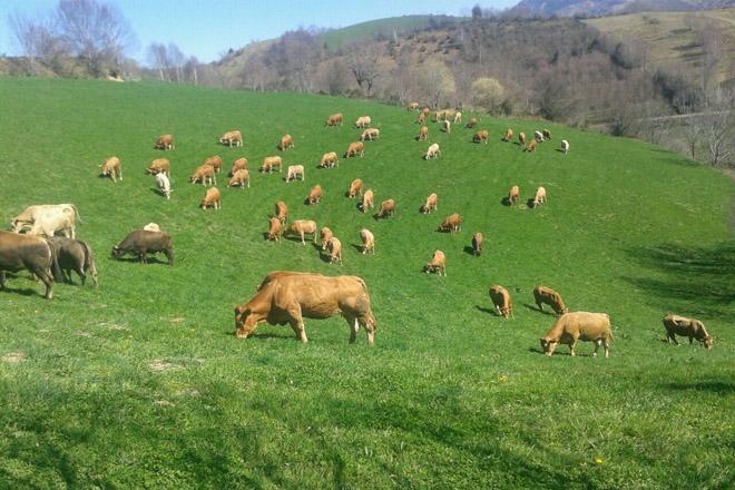 Galicia, en risco de perder ata 200 millóns de euros en fondos de desenvolvemento rural