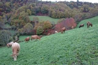 Haberá axudas agroambientais e para zonas con limitacións naturais no 2021