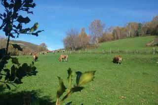 Axudas para agricultores e gandeiros con terreos na Rede Natura ou en parques naturais