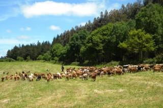Medio Rural di que a Comisión Europea esixiu excluír da PAC as fincas con pastos arbustivos de menos de 0,3 ha