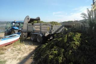 """""""As algas son un excelente abono para os solos galegos"""""""