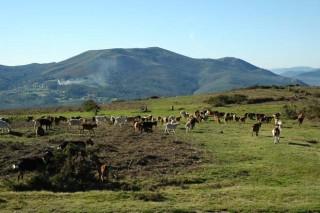 Programa da reunión de outono da Sociedade Galega de Pastos e Forraxes