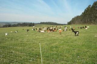 Demandan un mayor apoyo de la Xunta para promover la coexistencia de lobo y ganadería
