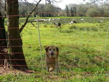 Convocadas as axudas para a prevención de danos pola fauna salvaxe