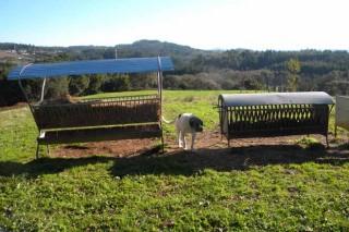 Ovica pide melloras nas axudas de incorporación para as ganderías de ovino ou caprino