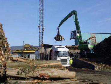 Ence proyecta introducir el pino en la fabricación de celulosa