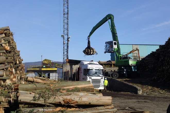 Ence lanza unha campaña para primar a madeira de máis de 30 anos