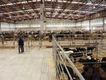 Bajada del ganado vacuno en Silleda en una jornada de escasa afluencia