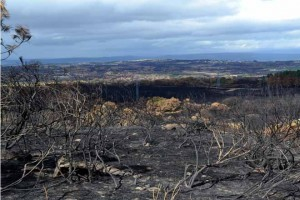 Monte calcinado en Cualedro, puesto de ejemplo de las consecuencias de la falta de pastos. / Imagen: Eloi Villada.