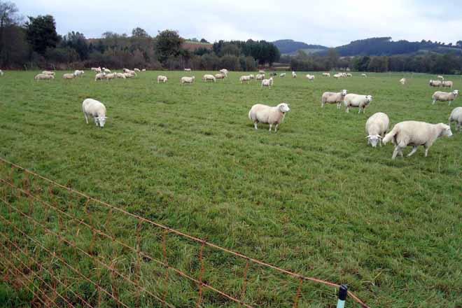 Os cans ceibos convértense nun foco de danos para a gandería de ovino e caprino
