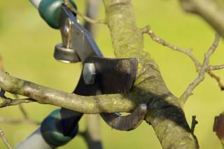 Xornadas sobre coidado das froiteiras na EFA Fonteboa