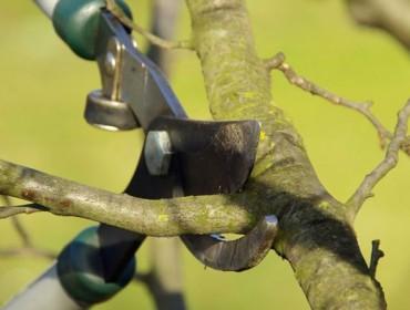 Taller de prácticas de poda de froiteiras