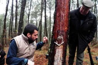 O monte galego, un mundo de potencialidades produtivas