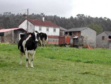 """""""A agricultura familiar alimenta ó 70% da poboación mundial"""""""
