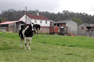 O 58% dos Concellos galegos xa emprendeu a revisión da contribución rústica