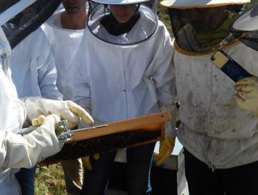 Curso de apicultura ecolóxica durante o mes de marzo