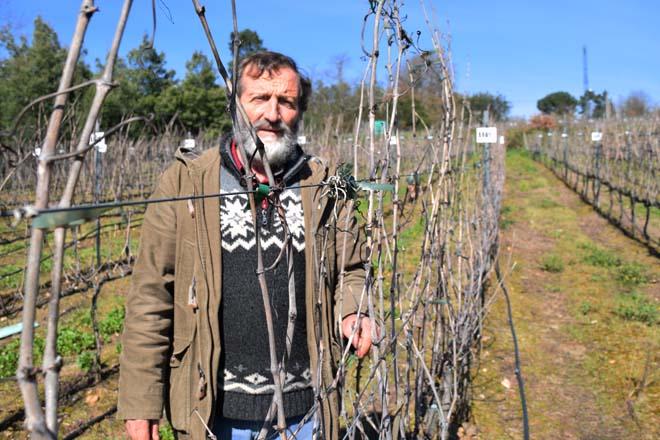 """""""Se facemos as cousas ben, as capacidades para a viticultura en Galicia son enormes"""""""
