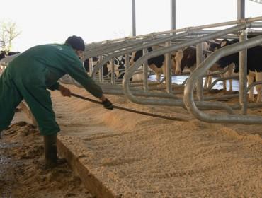 Cerca de 26.000 agricultores y ganaderos gallegos recibirán desde este viernes el anticipo de la PAC