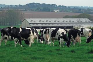 La Efa Fonteboa organiza un viaje a Granja San José y la ganaderías de Francia