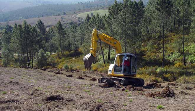 Miniexcavadora facendo buratos para unha plantación.