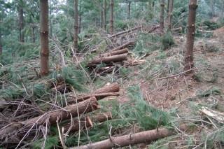 O Parlamento pide que a Xunta redacte o novo Plan Forestal seguindo as directrices consensuadas polo sector