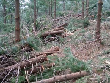 El Parlamento pide que la Xunta redacte el nuevo Plan Forestal  siguiendo las directrices consensuadas por el sector