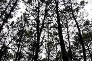 Xornadas sobre a estratexia forestal de Pontevedra